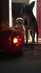 Happy halloween from The Dog House