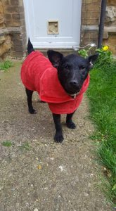 Patterdale in a Ruff and Tumble drying coat